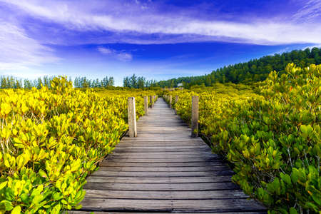 Wooden bridge at Tung Prong Thong or Golden Mangrove Field, Rayong province, Thailand