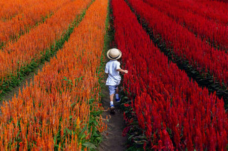 Little boy running on flower field at Chiang mai province,Thailand