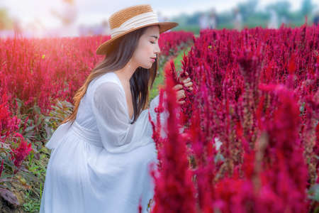 Beautiful woman sits happily smelling flowers in a field of colorful flowers in Chiang Mai, Thailand.