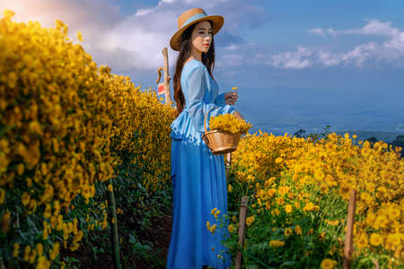 A young woman with a basket full of chrysanthemums Standing in the middle of a chrysanthemum garden in Chiang Mai, Thailand