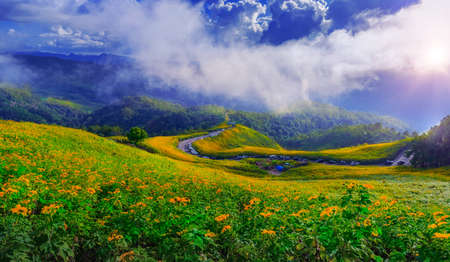Maxican Sun Flower. Tung bua tong at trendy famous destination traveller and tourism on winter at  Maehongson province, Thailand