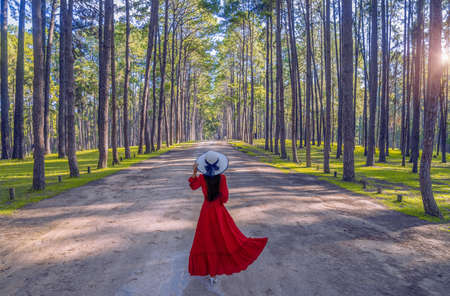 Woman tourist is traveling into pine tree garden at chiang mai province, Thailand