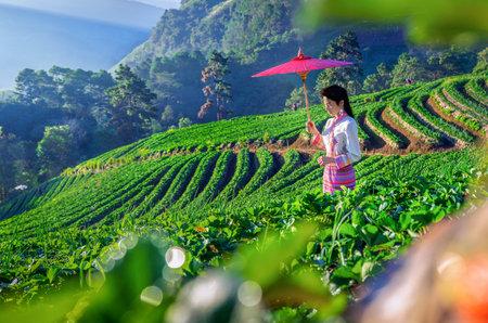 Thai woman visit strawberry farm with sunrise at Doi Ang Khang , Chiang Mai, Thailand