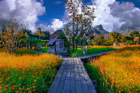 Wooden hut in a yellow flower field and valley in Lopburi, Thailand