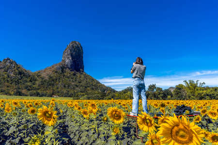 Sunflowers field with blue sky at Khao Jeen Lae,Lopburi Province,Thailand Imagens