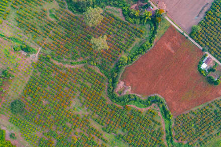 Aerial photography of agricultural plots Such as fruit orchards and corn plots in Thailand