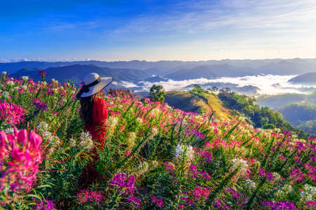 View point of the sea of mist and flower garden in Mae Sot District, Tak Province, Thailand.