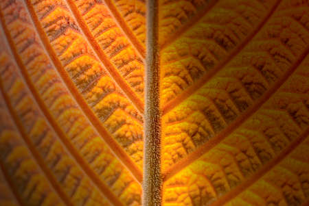abstract yellow striped of foliage from nature, detail of leaf textured background
