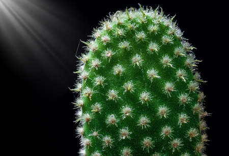 Macro photo fresh green cactus in pot ,decoration outside flower with black background