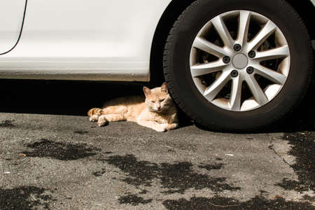 Cat lying beside the wheel of a car
