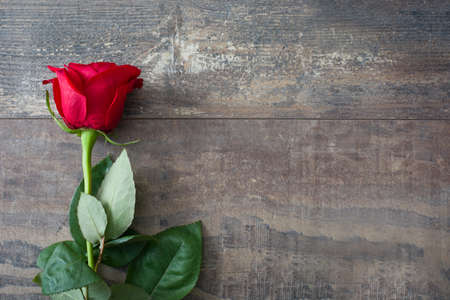 Valentijn roos