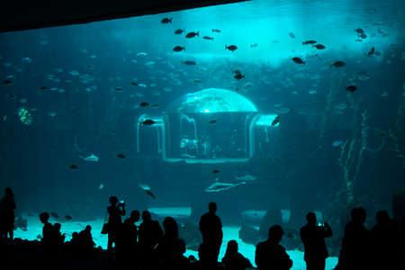 People watching fishes in aquarium. Gran Canaria Spain. May 2018. Poem of the Sea Aquarium.