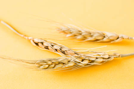 Wheat ears on yellow background