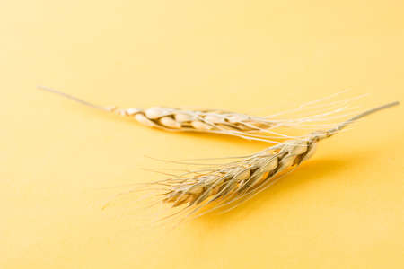 Wheat ears on yellow background Standard-Bild - 119782571