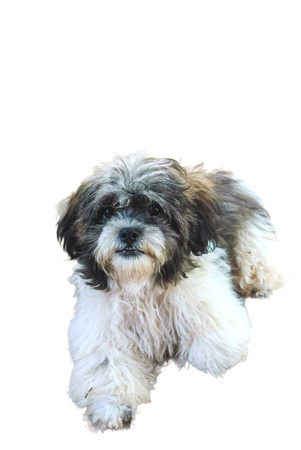 Closeup of a beautiful dog over white background photo