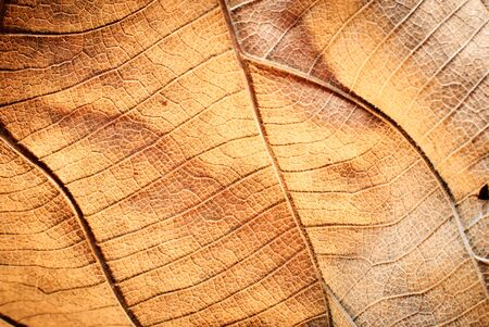 Dry leaf detail texture in stock photo