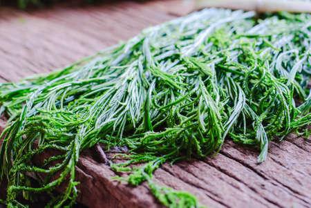 pennata: Green Acacia Pennata in Thai fresh marke