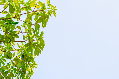 blue green background: green leaves treetop with blue sky background