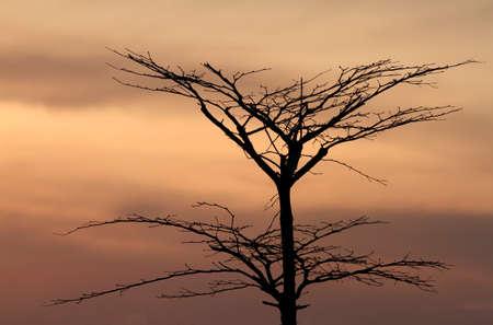 boom na zonsondergang achtergrond Stockfoto
