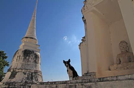 Dog sitting at Wat Uposatharam temple,thailand