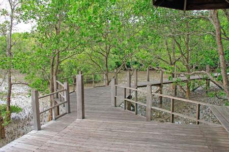 Footbridge Natural mangrove walkway in thailand