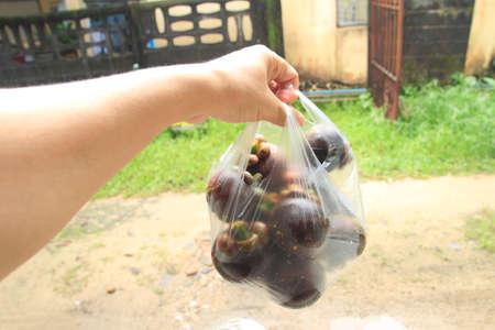 fresh Mangosteen, tropical fruit Stock Photo