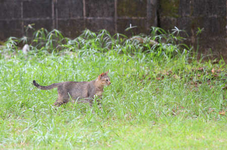cat for hunting in the nature Stock Photo