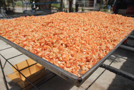 Dried Shrimp Processing in under the sun ,Traditional way to produce dried shrimp by drying under sunlight.