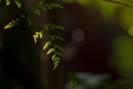Lines and textures of Green leaves ,Light and shadow of twigs, leaves