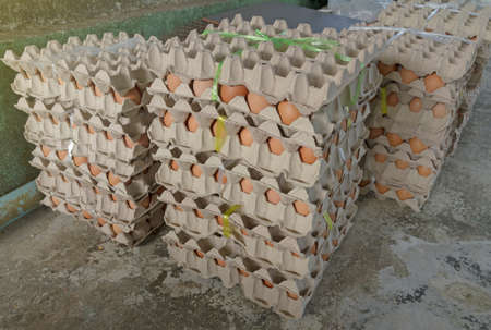 Fresh egg box prevent the eggs from breaking