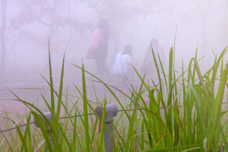 Tourists walking in the fields of Krachiew flowers in the  morning mist