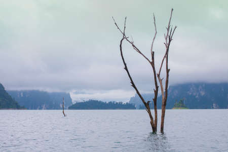 Dead trees standing in the dam, morning view, mist in thailand