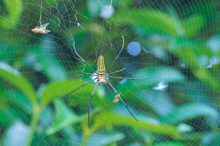 spider on web are known for the impressive webs they weave Banque d'images
