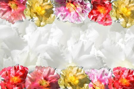 Background sweet pink flower. There is a sparkle and empty central space for text or foreground with clipping path and changing the background.