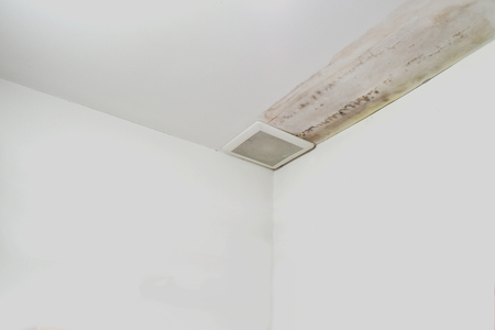Excessive moisture can cause mold and peeling paint wall , such as rainwater leaks or water leaks. Reklamní fotografie