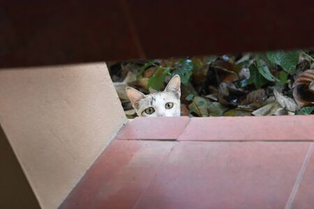 Short-haired white cat Is secretly looking at you with curiosity. Stock fotó