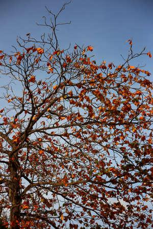 to thrive: big Tree Stock Photo