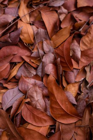 hojas secas: hojas secas