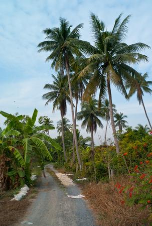 sylvan: Coconut
