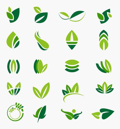 leaves vector Vector