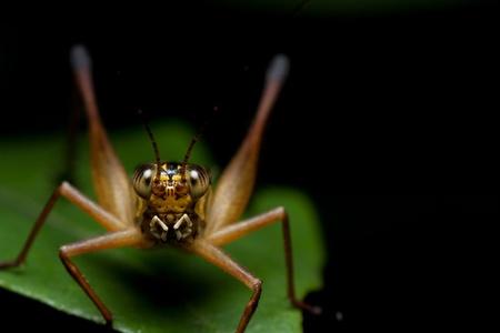 Golden Grasshopper photo