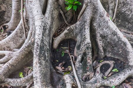tree trunks: tree roots