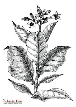 タバコの木手描きのビンテージ スタイル  イラスト・ベクター素材