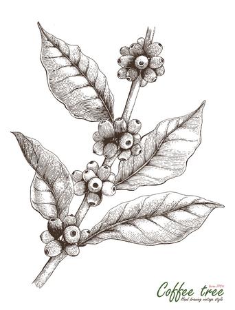 Coffee tree hand drawing vintage style Zdjęcie Seryjne - 74397306