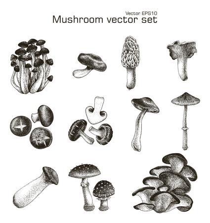 Mushroom vector set hand drawing