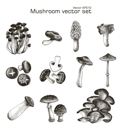 Mushroom vector set hand drawing
