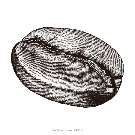 Coffee bean hand drawing engraving illustration