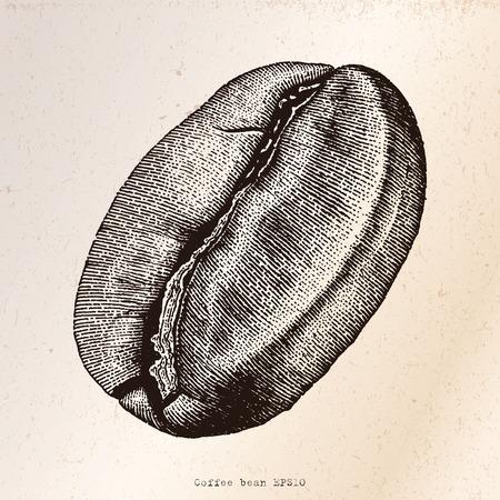grain: Coffee bean hand drawing engraving illustration