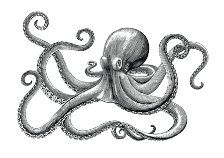 Octopus hand drawing vintage engraving illustration on white backgroud 免版税图像 - 102872428