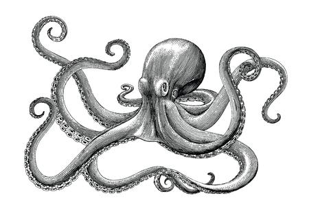 Pulpo dibujo a mano alzada, vintage grabado ilustración sobre fondo blanco.